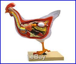 Chicken / Hen Anatomy model- 6 Parts