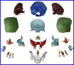 Human Medical Anatomical Adult Osteopathic Skull Model, 22-Part Didactic Colored